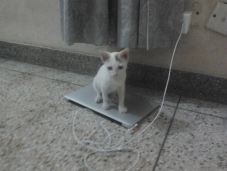 Kitty on my macbookair
